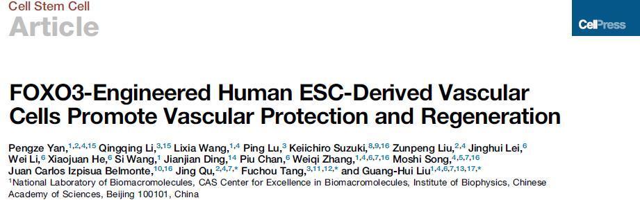 中国学者获得世界首例遗传增强人类血管...