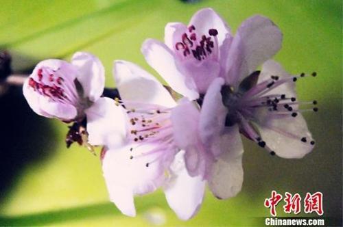 """""""竖蛋""""迎春、粘雀子嘴……春分习俗知..."""