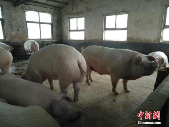 湖南省永州市经济技术开发区非洲猪瘟疫...