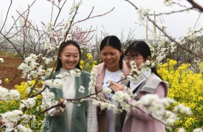 淅川县老城镇:万亩春花开 喜迎宾客来