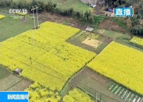 四川彭州:湔江河畔花如海 生态乡村春意浓